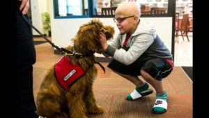 Therapy dog for children